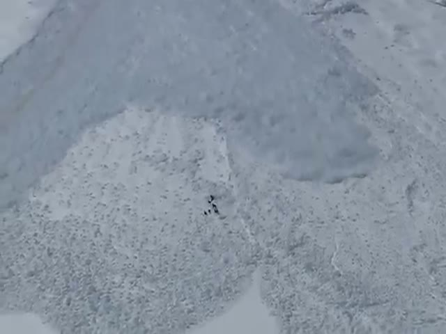 Chamois vs Snow Avalanche