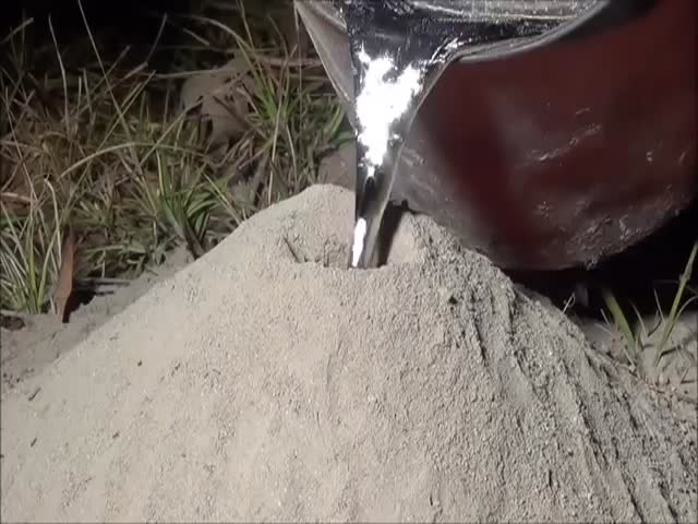 The Result of Filling a Fire Ant Colony with Molten Aluminium