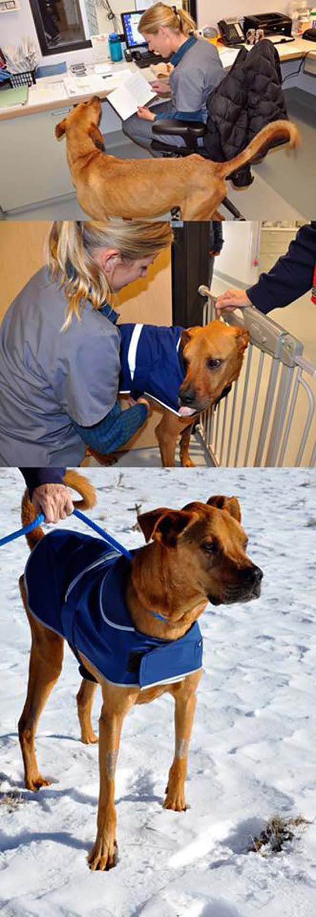 """The Miracle of the Rescued """"Skinny Dog"""""""