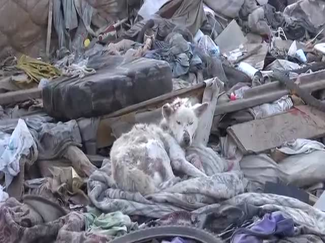 Sick, Homeless Dog Living in a Trash Pile Gets Rescued