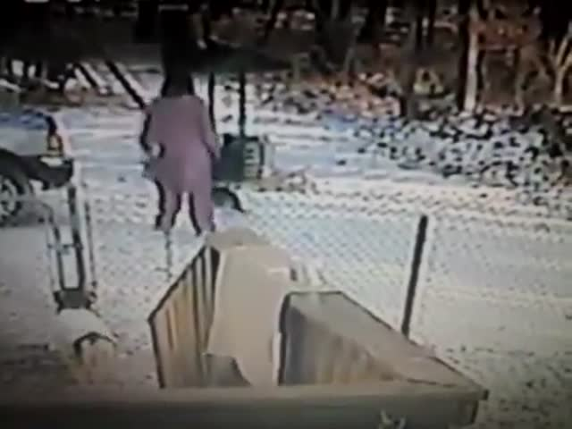 Stray Cat Gets Revenge on Woman Kicking Snow at Him