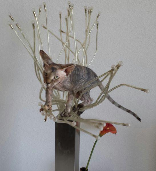 balancing on a lamp
