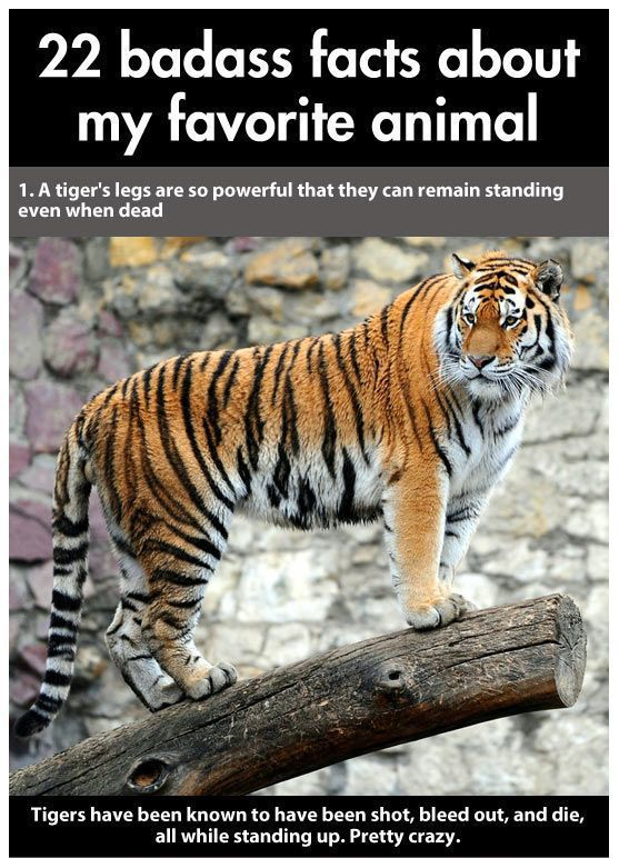 Things You Didn't Know About The World's Biggest Cat
