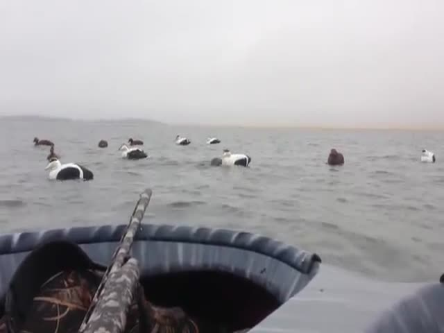 Cute Seal Pup Jumps into Duck Hunters Boat for Some Cuddles