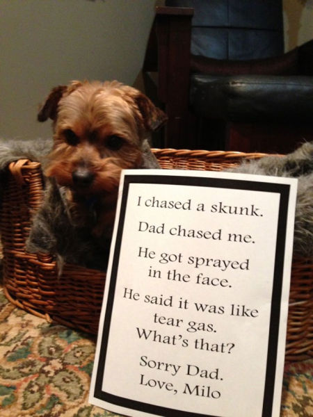 Sweet Dogs Admit Their Secrets in Public