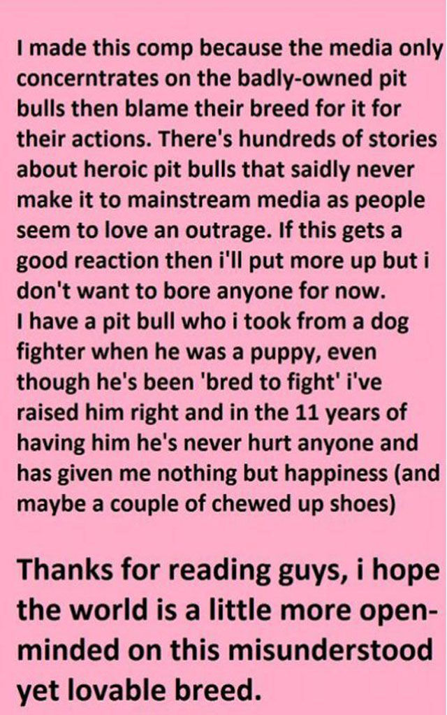 Pitbulls Acting like Hero