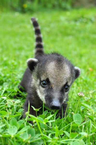 The Cutest Baby Animals Pics of 2013