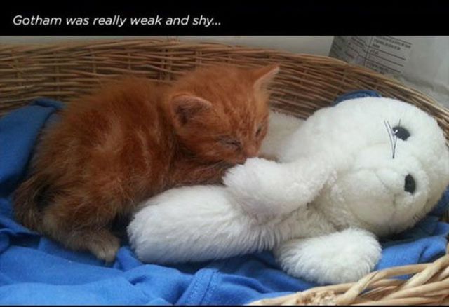 The Sweet Rescue Story of a Cat