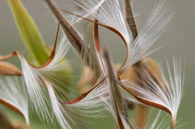 Unusual Looking Seeds That Give Ordinary Plants