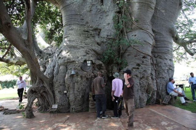Inside a Living, 6000 Year Old, Baobab Tree