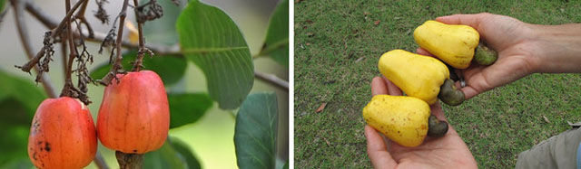 Did You Know How These Fruit and Vegetables Grow?