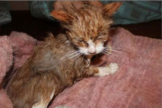Sweet Kittens are Saved from Near Death