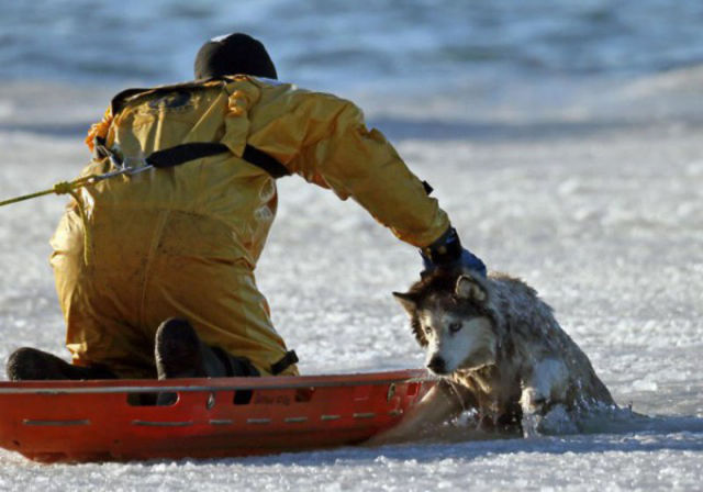 Husky Rescued from Icy Death