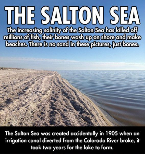 Things You Might Not Know about the Salton Sea