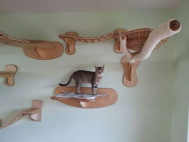 A Totally Cool and Creative Playground for Cats