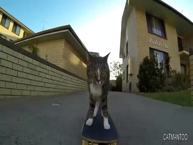 Skateboarding Cat Does Stunning Tricks
