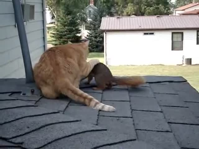 Squirrel and Cat Play Together