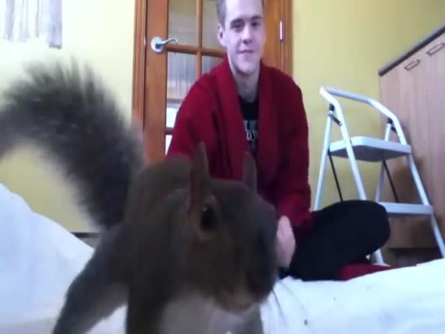 Guy Plays with His Pet Squirrel