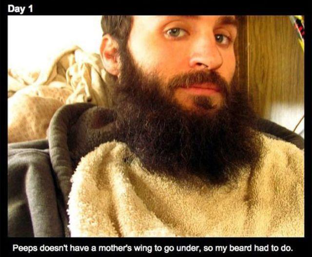 How a Man's Beard Saved a Baby Duck