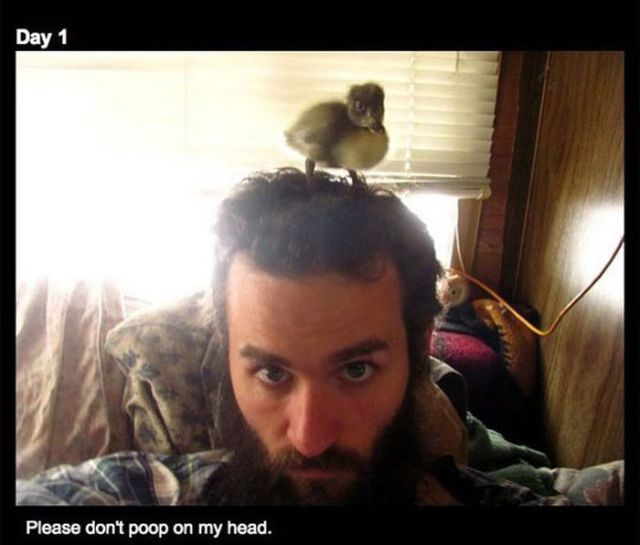 How a Man's Beard Saved a Baby Duck