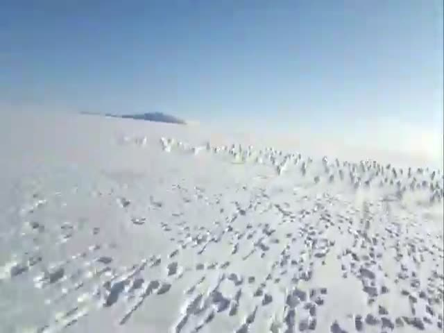 Stampeding Rabbits in Siberia Running Away from a Snowmobile