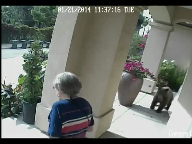 Elderly Couple Completely Unaware of Bear on Front Porch