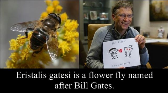 Animals, Insects and Plants Named after Celebs