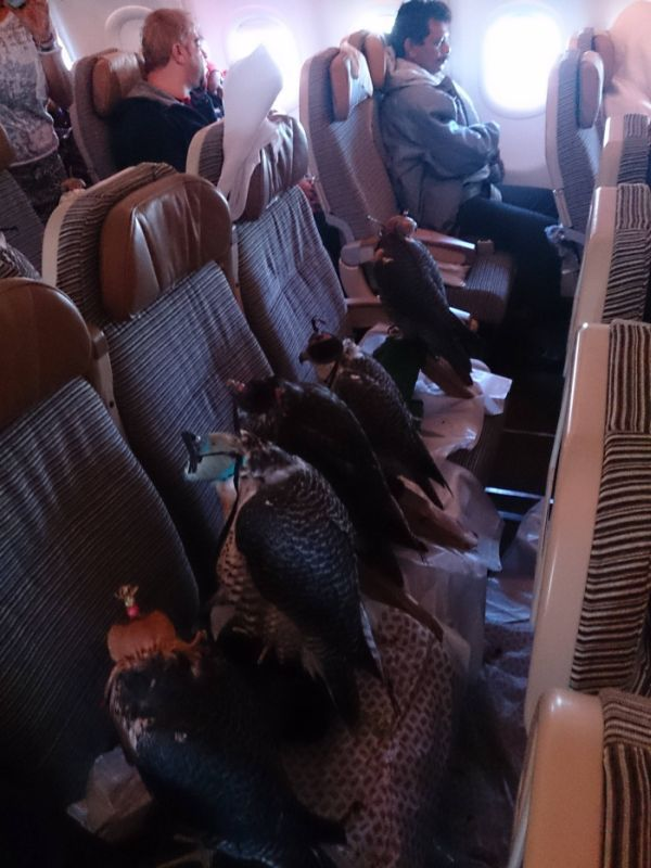 The Oddest Passengers Ever to Board an Airplane