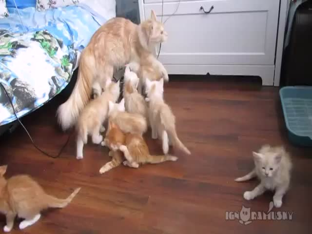 Cat Mom Tests Kittens' Reaction