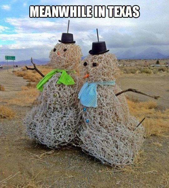 You Will Only See This in Texas