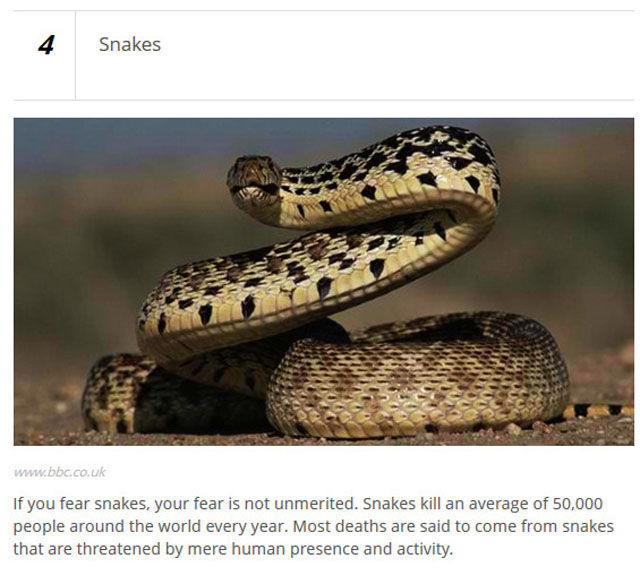 Animals Who Are Known for Causing Human Deaths