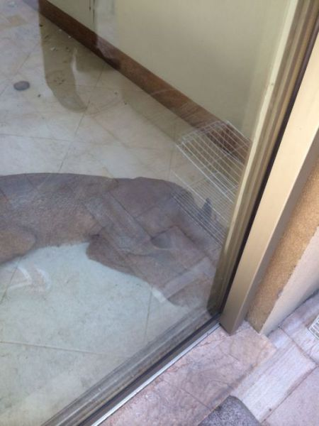 This Damage Was Caused by a Cougar Break-in