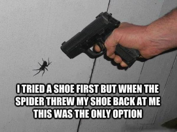 If You're Scared of Spiders Then Give Australia a Miss