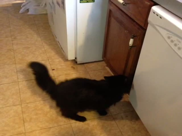 Cat's Too Fat to Jump Straight on the Counter, but Knows a Way Around