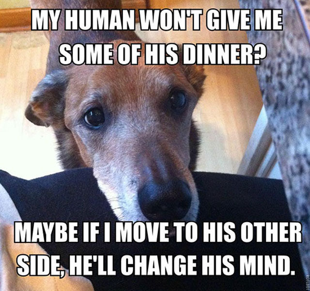 If You've Ever Owned a Dog, You Will Totally Get This