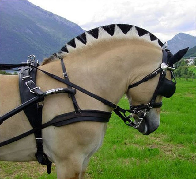 "Real-Life Versions of the ""Frozen"" Horses"