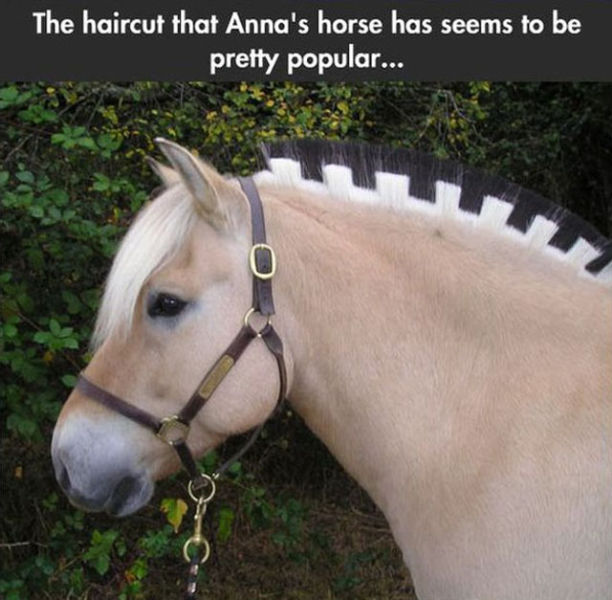 """Real-Life Versions of the """"Frozen"""" Horses"""