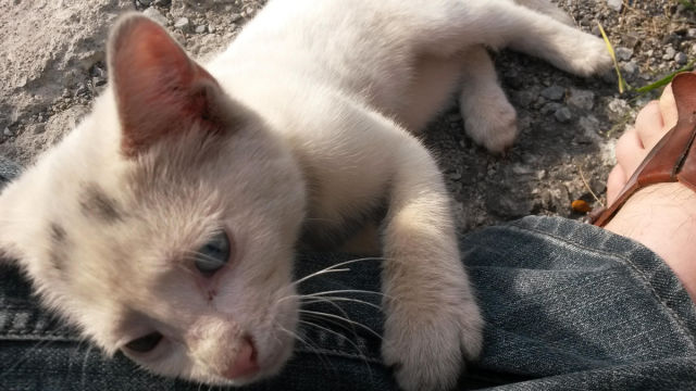 The Sweet Story of the Guy Who Rescued a Kitten