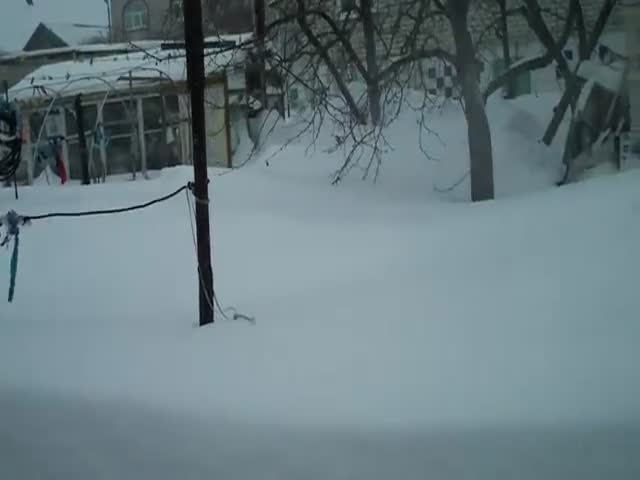 The Snow Is Deep and the Cat Hates It  (VIDEO)