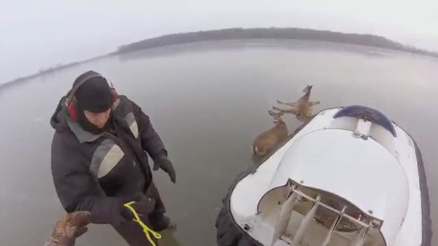 2 Beautiful Deer Rescue Stories