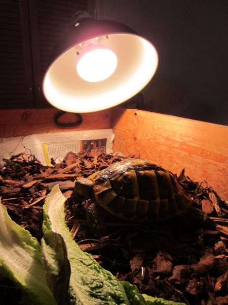 The Hibernating Tortoise Is Awake