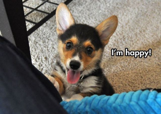 This Cute Corgi Named Pancake Is a Very Happy Dog