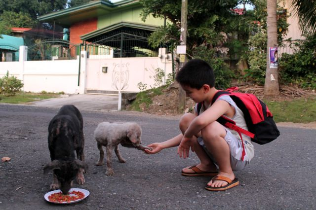 One Young Boy's Touching Dedication to Stray Dogs