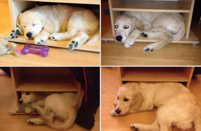Pets Go from Small to Big and Don't Change a Day