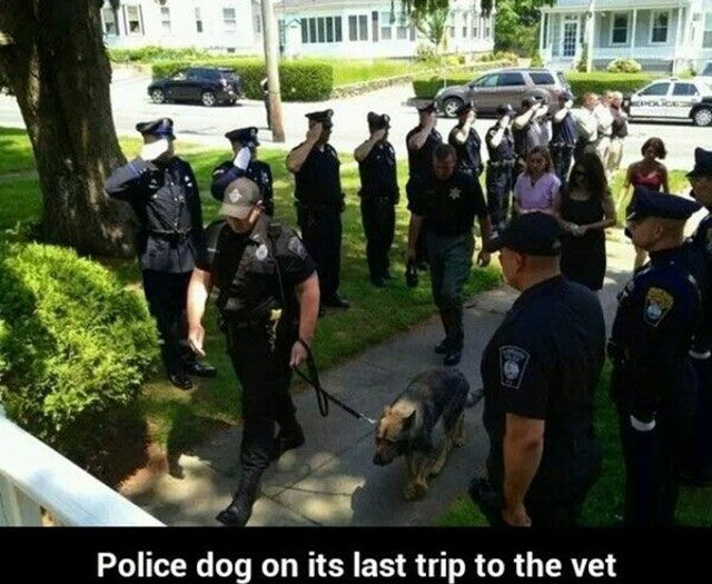 The True Character of People Is Revealed in the Way They Treat Animals
