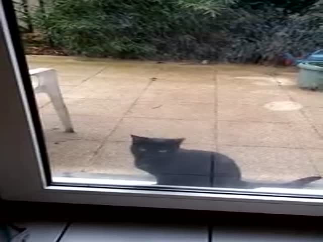 Cat Desperately Wants to Get Inside  (VIDEO)
