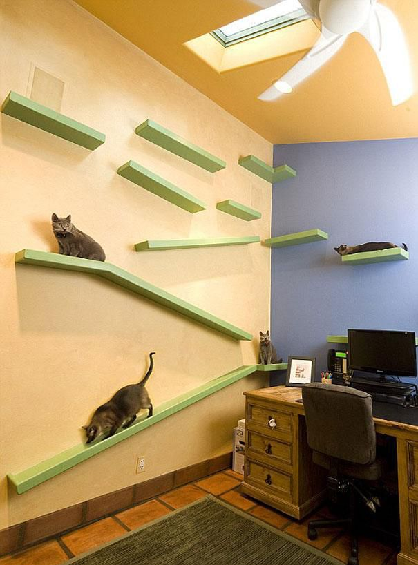 This Is Every Cat's Dream Home Thanks to Crazy Cat Loving Owner
