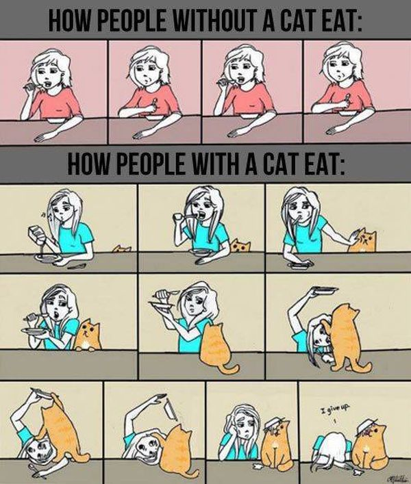 Cats Are a Really Special Kind of Creature