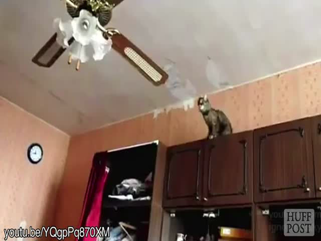 Worthless Cats That Can't Jump  (VIDEO)