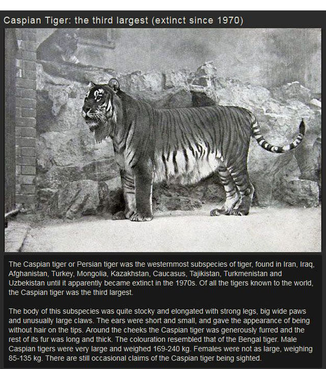 Some of the Most Interesting Extinct Animals Ever